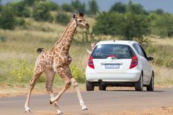 Human baby staring at giraffe baby (Photo by Andy Lee)