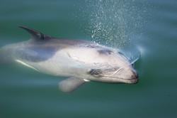 Heavisides+dolphin
