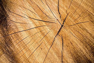 Cut log.jpg