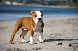 puppy-345334