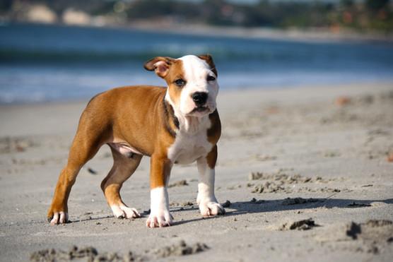 puppy-345334.jpg