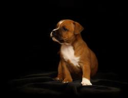 puppy-2166763