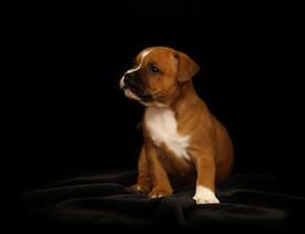 puppy-2166763.jpg