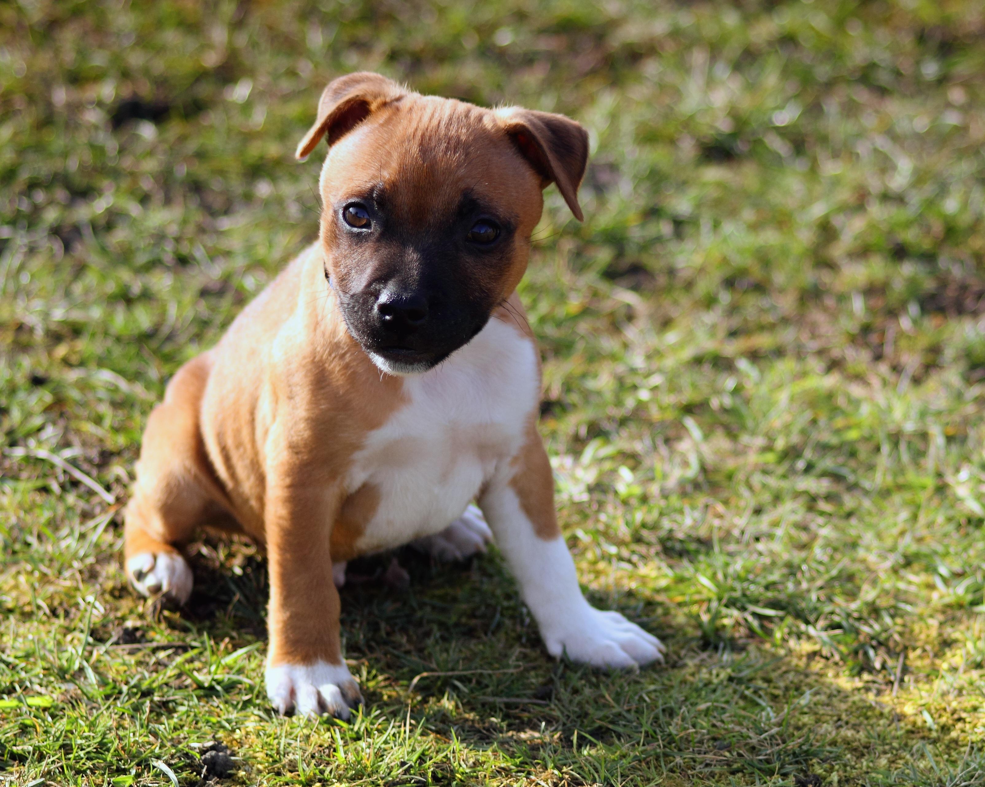 puppy-843371