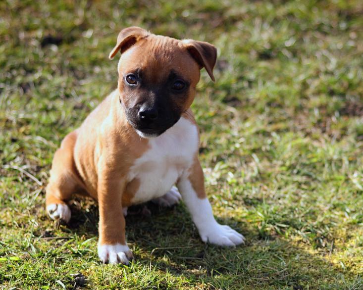 puppy-843371.jpg