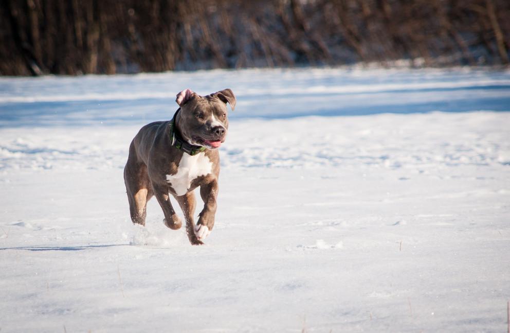 dog-3981542.jpg