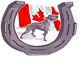 GOLDEN HORSESHOE AMERICAN PIT BULL TERRI