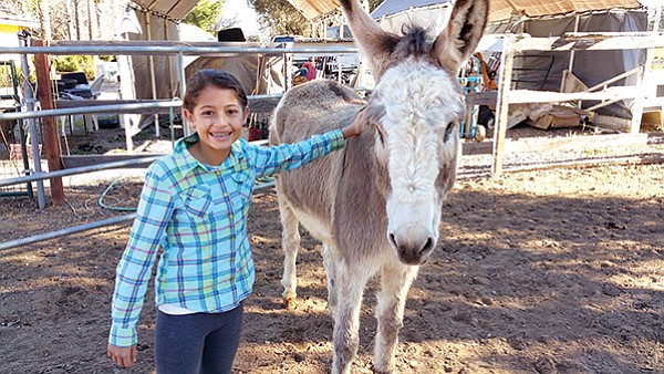 Jack (donkey) with Ashley (visitor)