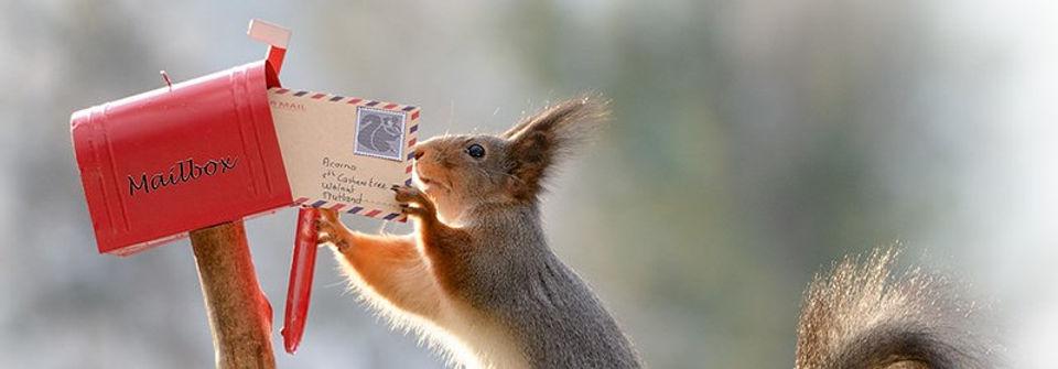 squirrel_mailbox.jpg