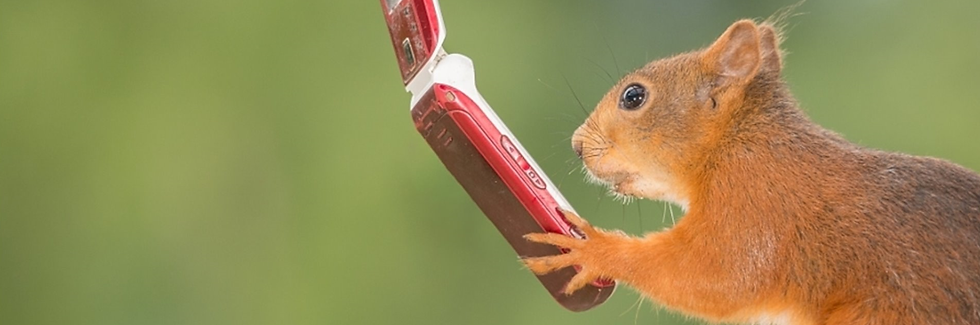 squirrel_with_a_phone2.png