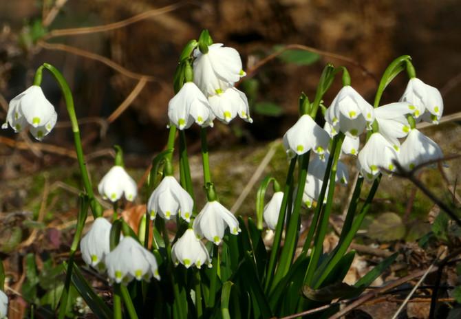 Fit in den Frühling!