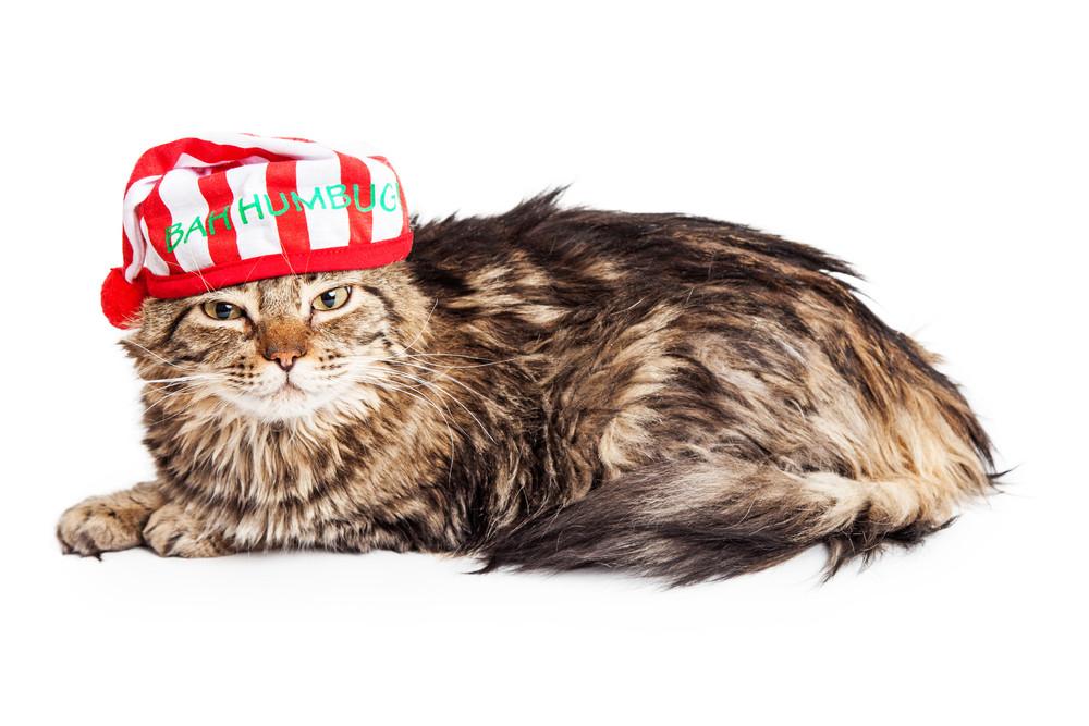 bah-humbug-christmas-cat