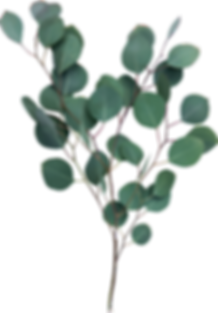 eucalyptus .png