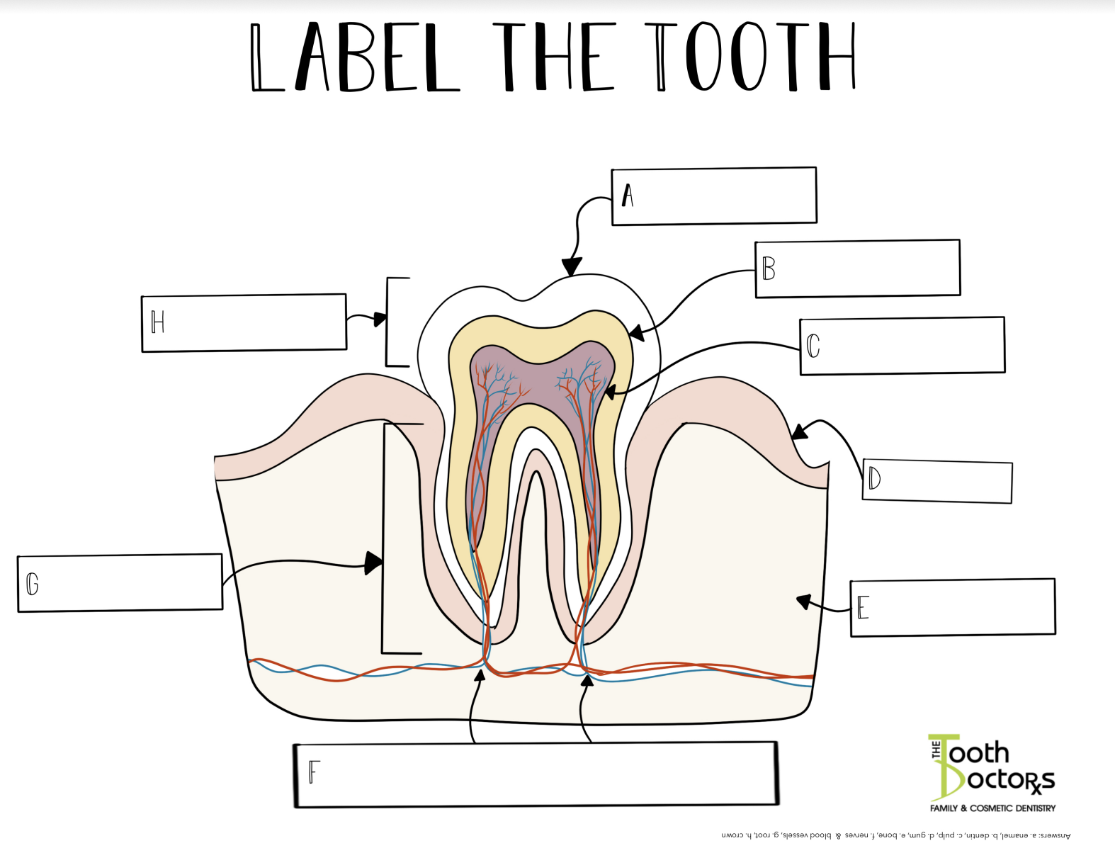 label the tooth