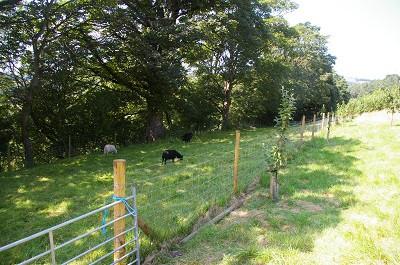 fence middle field.jpg