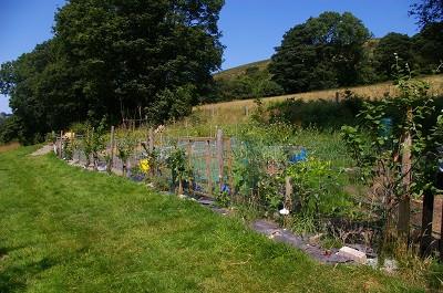 fence veg field.jpg
