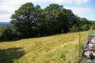 fence top field.jpg