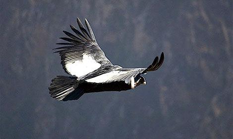 patagonman patagonia extreme triathlon xtri xtreme torres de paine tourism turismo chile condor