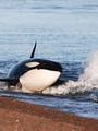 orcas-pta-norte-235.jpg
