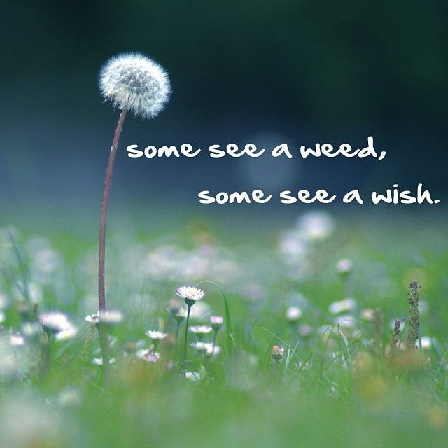 Some see a weed.jpg