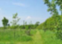 Olney Green image.jpg