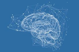 Hjärnan.jpg