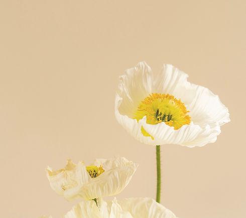 Flower 2_edited.jpg