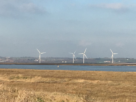 A Green New Year blows in on Sheppey