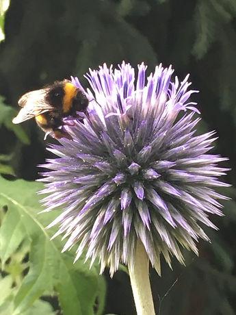 Bee best.jpeg