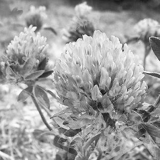 florsita1.jpg