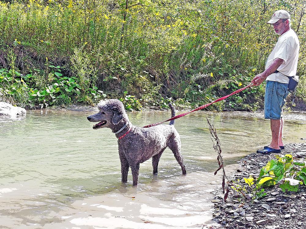 poodle canadaway creek