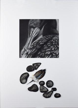 Just So—Cormorant