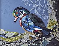 Wary Wood Duck 1.jpg