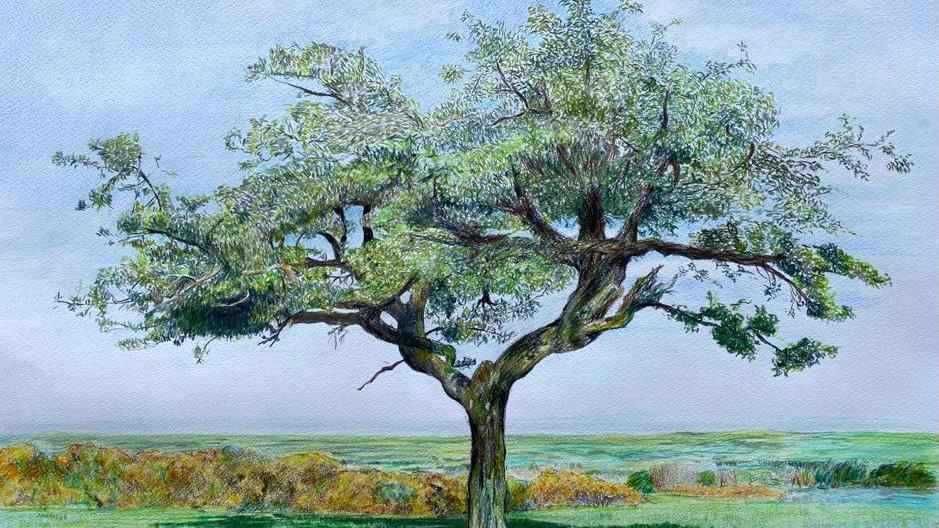 Northumbrian Tree