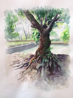 Des racines et un arbre