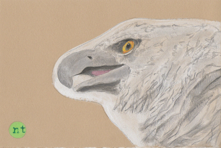 C. Prose, Harpy eagle near threatened.jpg