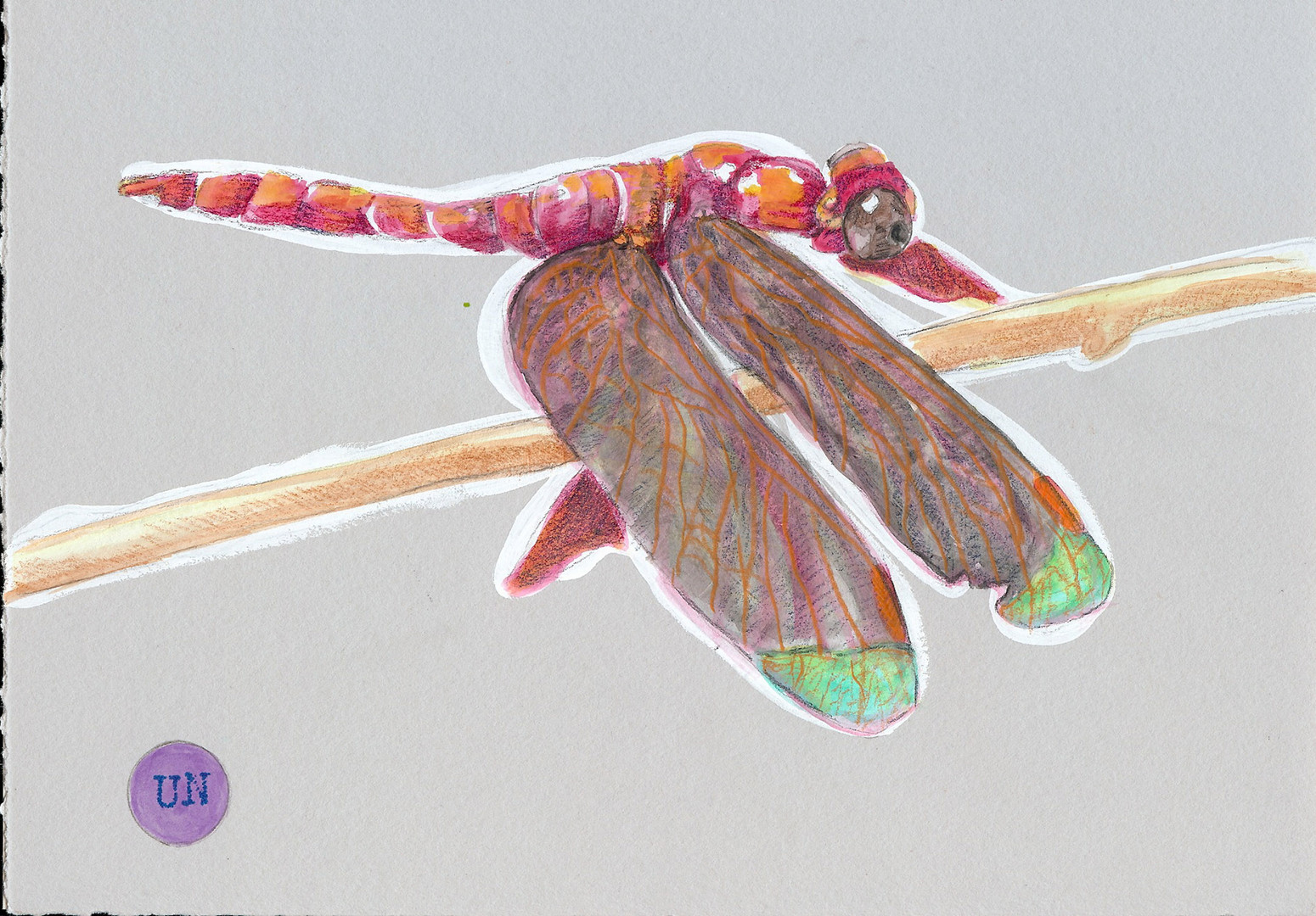 Grasshawk Dragonfly Unknown.jpg
