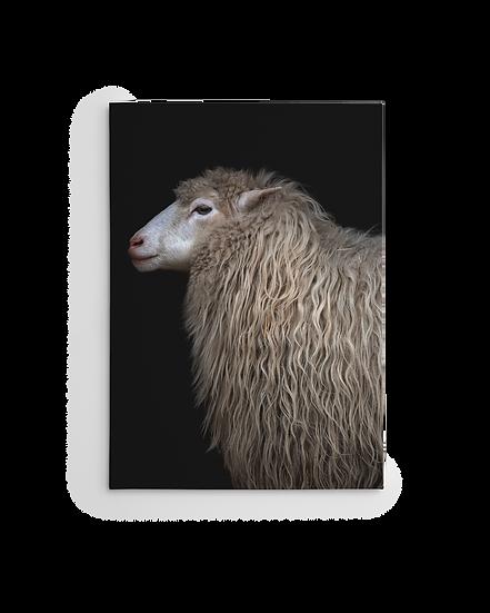 SCHAF / TEAM 7 Edition