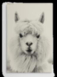 Wall_Alpaca_535.png