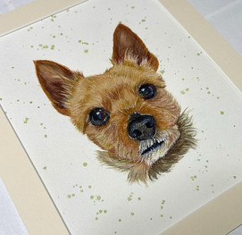 smalldogportrait_edited.jpg