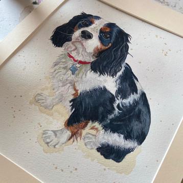Rolo Cavalier Pet Portrait.jpg