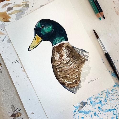 Watercolour Duck