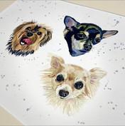 Chihuahuaportrait.jpeg