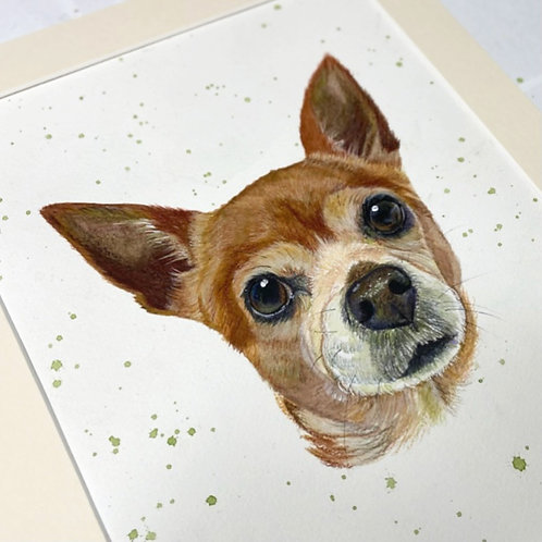 8x10 Pet Portrait for the Price of a 6x8