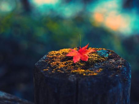 O-HIGAN Ceremony ( Autumn Equinox )