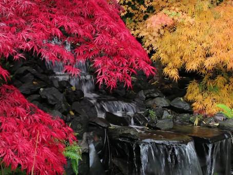 Autumnal Equinox Day (秋分の日)