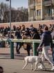 A Milano Darsena affollata, scattano blocchi agli ingressi