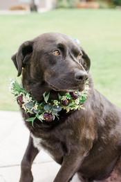 Dog Floral Collar