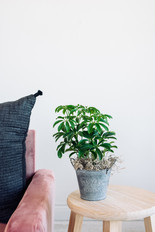 6in. Plant Basket