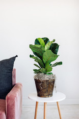 "8"" Plant Basket"